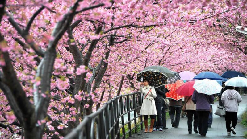Đi du lịch Nhật Bản nên mặc gì cho phù hợp với thời gian, hoàn cảnh