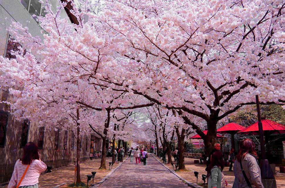 Tất tần tật du lịch Nhật Bản Tết Nguyên Đán 2020 chơi gì, ăn gì
