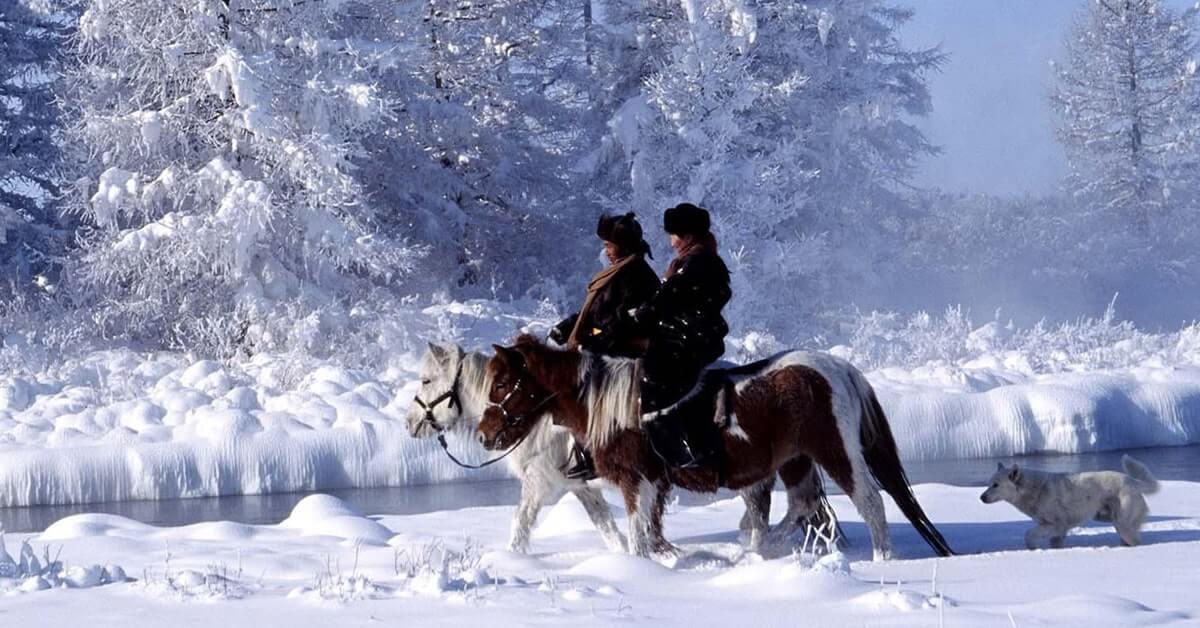 Ngựa Bạch Mông Cổ sinh trưởng trong điều kiện sống vô cùng khắc nghiệt.