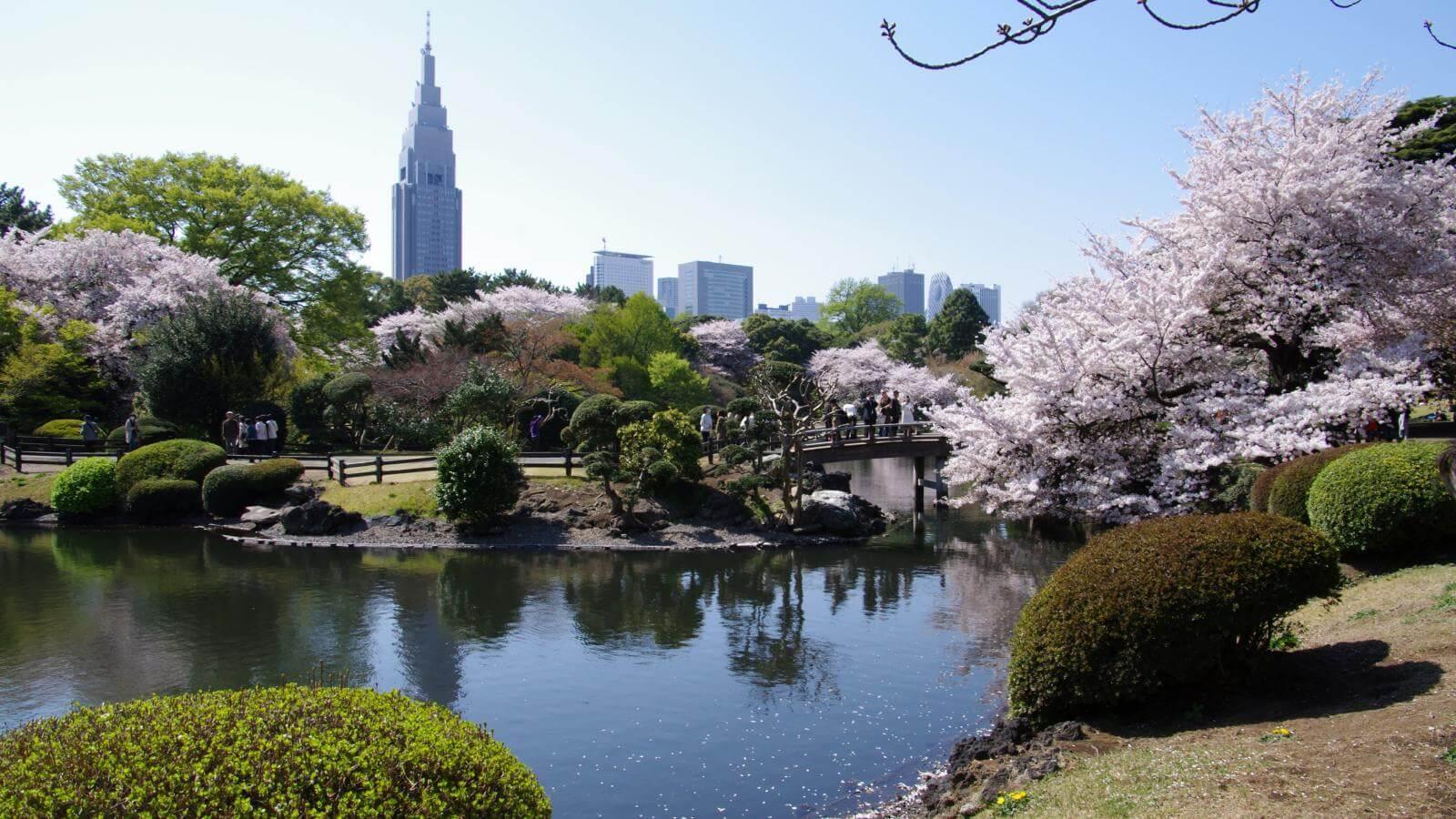 Trải nghiệm mùa hoa anh đào đẹp nhất ở công viên Shinjuku Gyoen