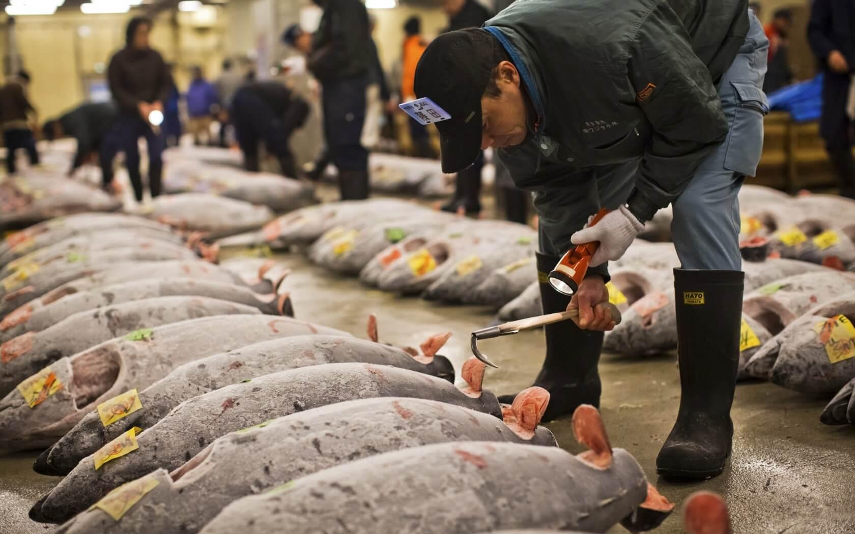 Đến chợ cá Tsukiji thưởng thức muôn ngàn những món ăn hấp dẫn chế biến từ hải sản tươi ngon