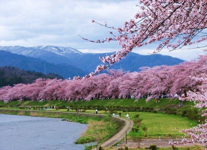 Mùa xuân ở Nhật Bản