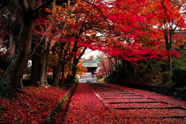 Nhật Bản mùa lá phong đỏ